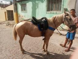 Cavalo Topado