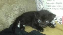 Estou doando um gatinho