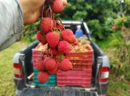 Lichia fruta