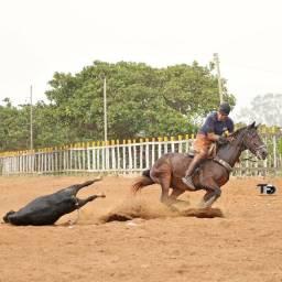 Cavalo de direita