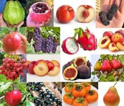 Mudas De Qualidade ,Frutíferas/ Coco  Já produzindo (A partir de R$200)