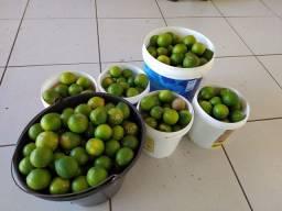 Limão rosa/cravo em Umuarama