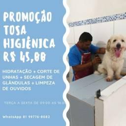 PROMOÇÃO TOSA E BANHO
