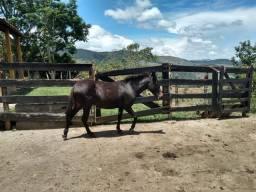 Duas lindas mulas pelo preço de uma