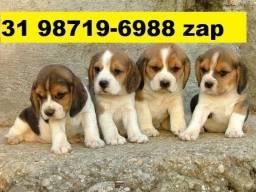 Cães Filhotes Top BH Beagle Basset Lhasa Lulu Bulldog Maltês Shihtzu Yorkshire