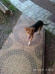 Doa-se cachorro Brincalhão