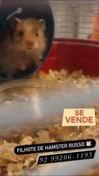Título do anúncio: Filhotes de hamster russo