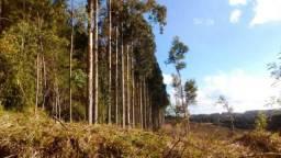 Fazenda para Venda, 453.291,30 m², Campo Alegre / SC