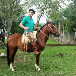 Vendo égua crioula domada e registrada com encilhas