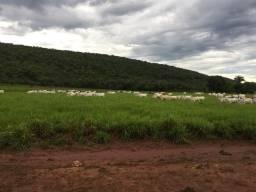 Fazenda 185 hectares com 140 de pasto formado