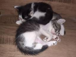 Doa - se gatos