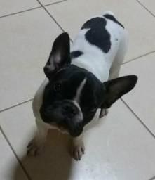 Procuro uma namorada, Bulldog francês