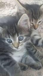 Doação de um casal de gatinhos