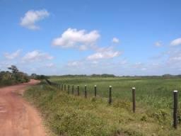 32 hectares todo no pasto a 25 km de Castanhal R$240 mil reais