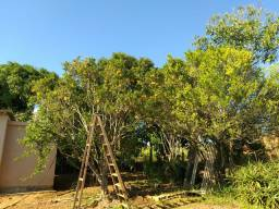 Vendo chácara de 2500 m² em Capão Bonito