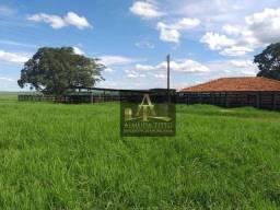 Excelente Fazenda para Venda em Penápolis -SP - Confira!!!!