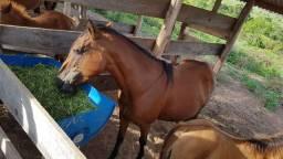 Vendo 4 Cavalos