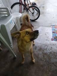 Cachorra doação Fiona