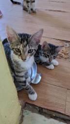 Estou doando esses 4 gatos são 2 machos e 2 fêmeas