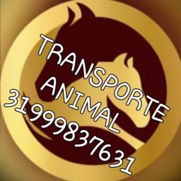 Transporte x Frete Animal