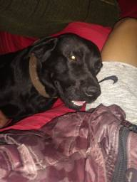 Cachorro macho a procura de namorada para cobertura