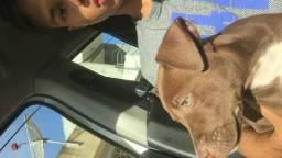 Pitbull Monster Red Nose