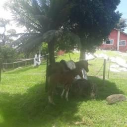 Chacara em São Jose dos Pinhais 20.653 m²