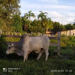 4,42 hectares em Benevides por 250 mil reais porteira fechada