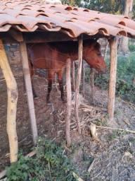 Vendo um cavalo  PREÇO A NEGOCIAR