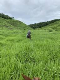 Excelente fazenda em Alagoa Grande - PB 120 ha