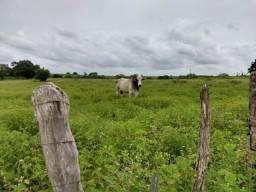 Fazenda estruturada em monte alegre com 350 hectares