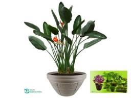 Vaso de Planta Horta Floreira e Jardim