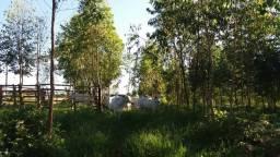 Sitio com 04 alqueires em Curiúva