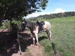 Égua Pent Horse