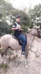 Vendo esse lindo cavalo, super manso, ótimo pra crianças