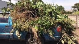 Trabalho com corte poda de árvore limpeza de terreno jardinagem