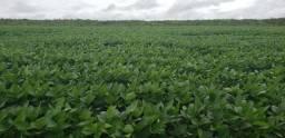 Fazenda com 20.000 Ha sendo 14.700 agricultaveis