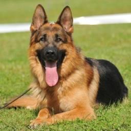 Adestramento e passeios com cães