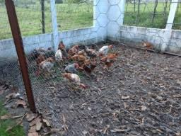 Granja em Monte Alegre/ RN estrutura pronta pra morar e fazer criação
