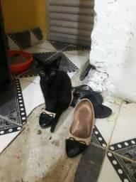 Doando gatinha toda preta
