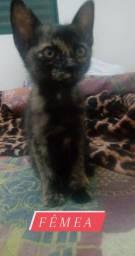 Doação filhote gatinha