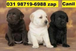 Canil Lindos Filhotes Cães BH Labrador Pastor Akita Boxer Rottweiler Golden