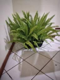 Samambaia com vaso retangular