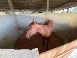 Hospedagem cavalos ? baias/ cocheiras