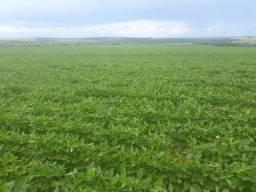 Fazenda 100 Alqueires Municipio Jatai.terra lavoura,Plana