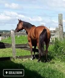 Hospedagem e Treinamento Cavalo de Hipismo - Passeio Baia Pasto Feno Hotelaria Equitação