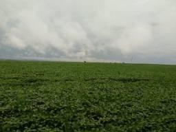 Arrendo lavoura com 200 ha para soja