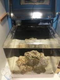 vendo Aquário marinho macro m60