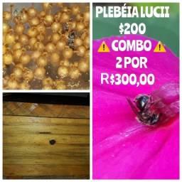Título do anúncio: Caixa de abelha Lucii