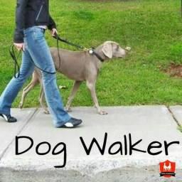 Dog Walker passeios interadivos
